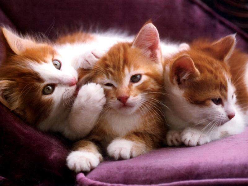 Todo lo que debes saber sobre los gatos