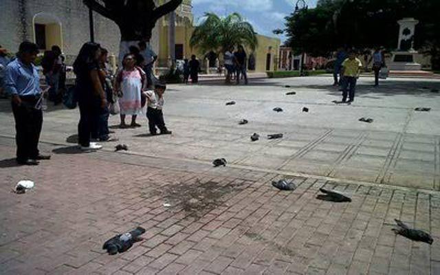Terror! Lluvia de palomas en Mérida - Video