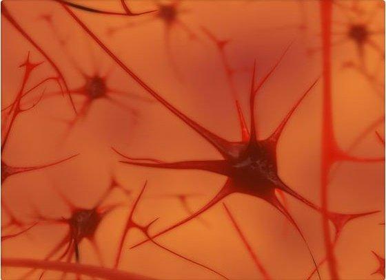 Video: Así es una neurona cuando pensamos