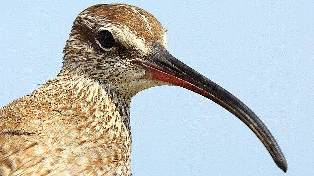 Aves que sobreviven a huracanes y tormentas