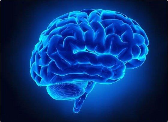 Las áreas del cerebro donde nacen las vocales