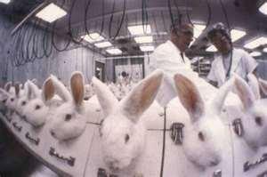 Importancia y beneficios de los productos libres de crueldad
