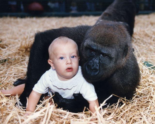Video: Niña juega en la jaula con los gorilas