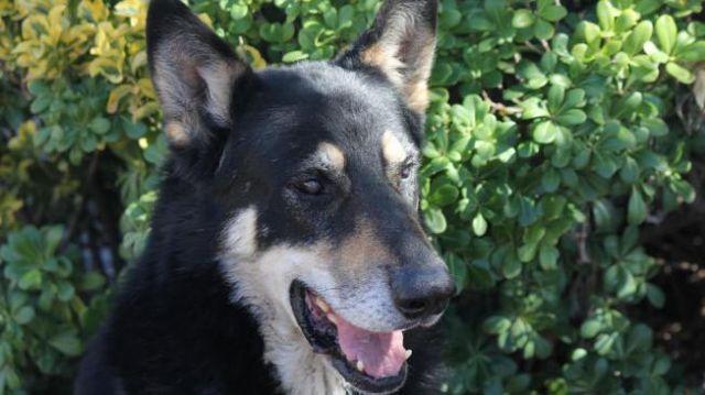 Perro vive desde hace seis años en la tumba de su amo