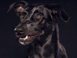 Cómo funcionan los seguros para mascotas