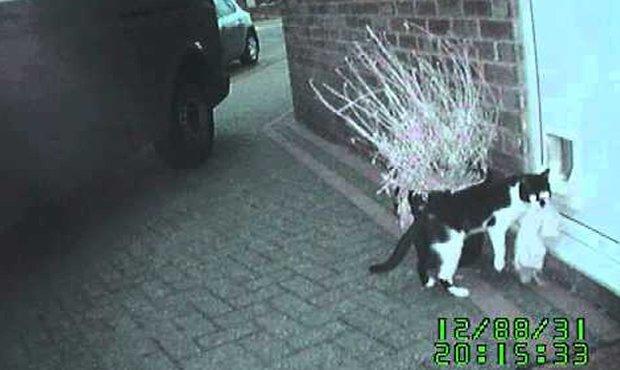 Video: Conoce a 'Denis' el gato ladron en acción