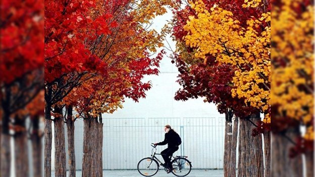 ¿Por qué las hojas de los árboles cambian de color?