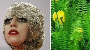 Un helecho con el nombre de Lady Gaga