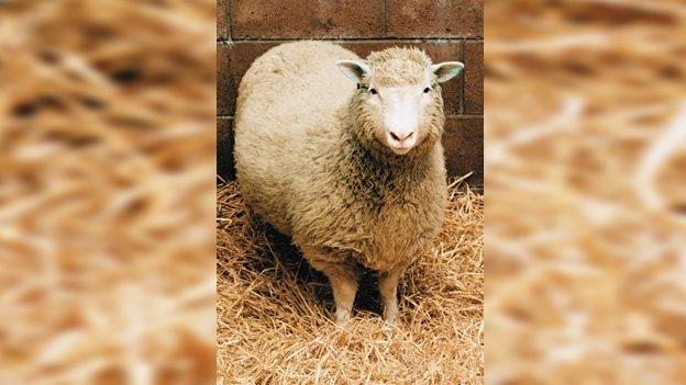 Murió el científico responsable de la clonación de la oveja 'Dolly'