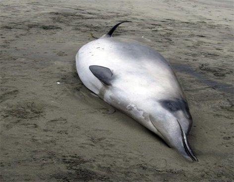 Hallan cuerpos de ballenas desconocidas