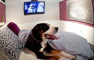Insólito: Inauguran hotel alojamiento para perros