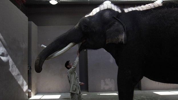Video: Conoce a 'Koshik', el elefante que habla