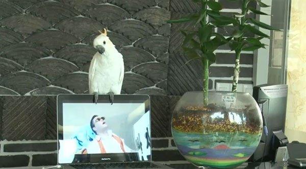 Video: Loro canta el 'Gangnan style' completo
