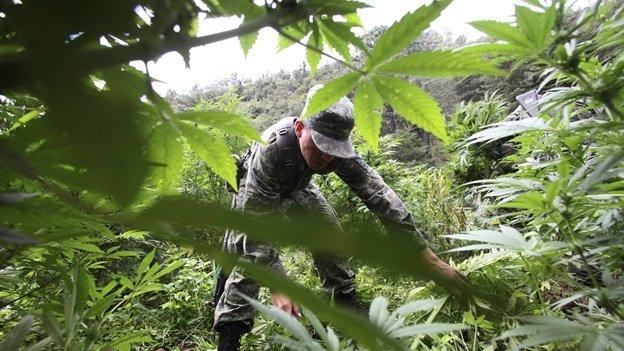 ¿El consumo de marihuana es una decisión ciudadana?