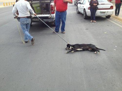 Fotos: Ahorcan a un perro por la presencia de Felipe Calderón