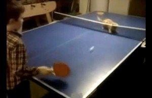 Video: Gatito juega al ping pong