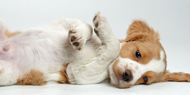 Los nombres de perros más usados del año