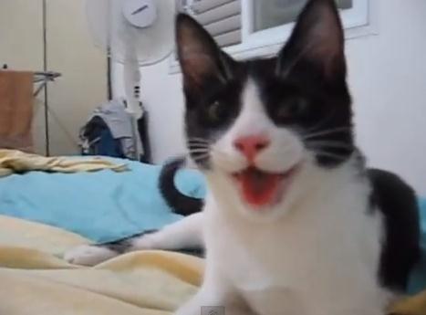 Video: El gato que cree ser perro