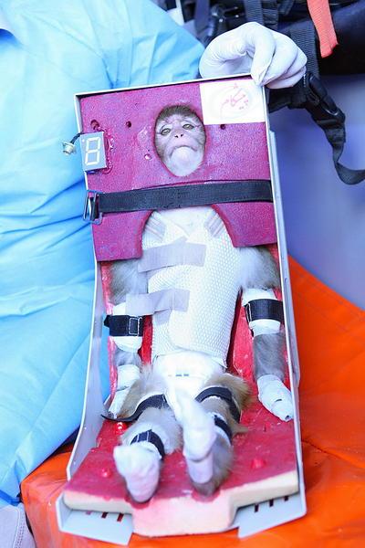 Irán envía un mono al espacio en un cohete