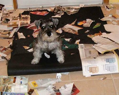 Las cosas que a los perros más les gusta destruir