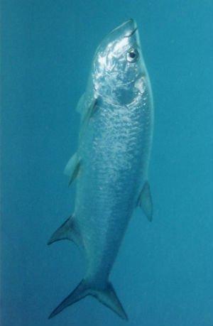 Video: Pez gigante ataca a un pescador
