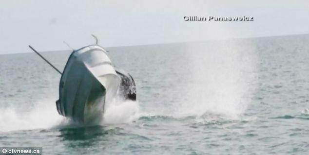Video: Ballena tumbó una embarcación