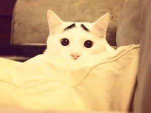 Video: el extraño gato con cejas furor en internet
