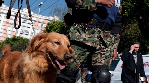 Perro evitó el secuestro de una niña
