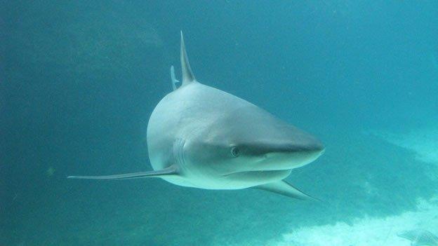 Tiburón ataca y mata a un nadador