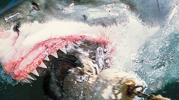 Inodoro vs. Tiburón ¿Quién es más peligroso?
