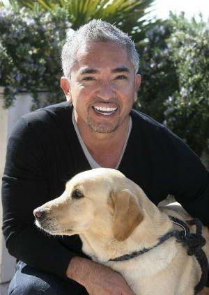 Video insólito: el 'encantador de perros' mordido por un labrador