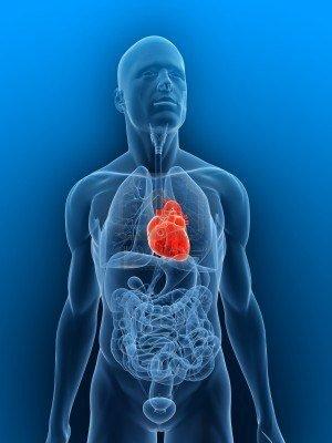 ¿El corazón sigue latiendo fuera del cuerpo?
