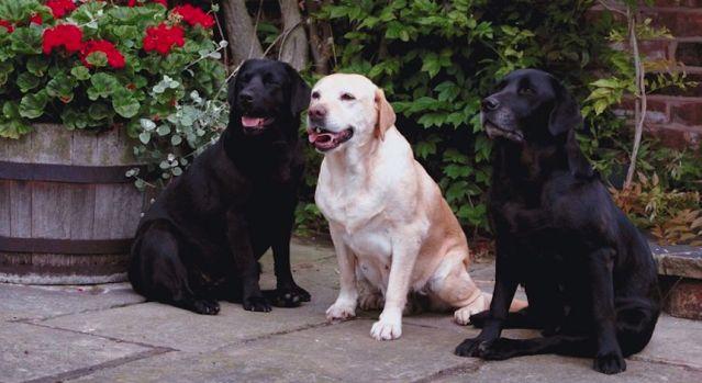 Qué hacer para que tu perro no padezca el calor primaveral