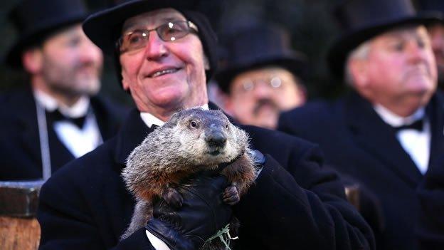 Insólito: la marmota 'Phil' acusada de estafa