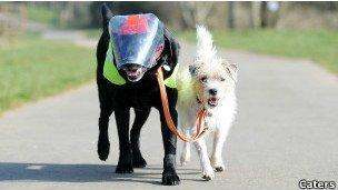 Perro es el guía de su compañero ciego