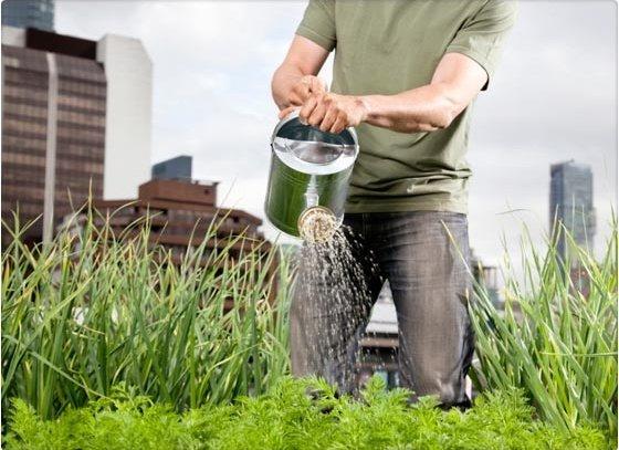 Conoce los beneficios de tener un jardín