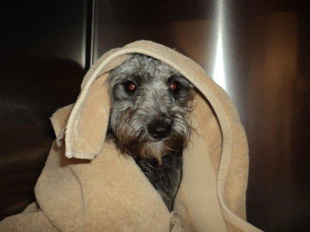 Abandonó a su perro en las vías del tren porque ya no lo quería