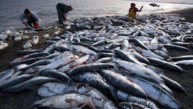 Océanos al borde del colapso - Ecosistemas en peligro