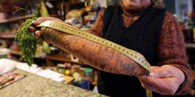 Insólito: Cosecha una zanahoria gigante de 130 centímetros