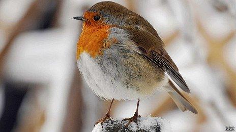 ¿Cuántas aves mueren al estrellarse contra un vidrio?