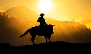 España: Sacrifican caballos pura sangre debido a la crisis económica
