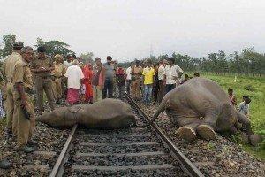 Tres elefantes mueren arrollados por un tren - Foto