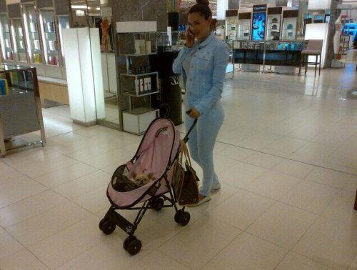 Foto: Ninel Conde lleva a su mascota en una carreola de bebé