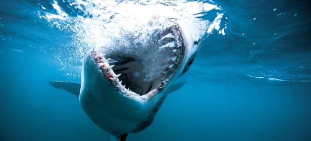 Un turista muere atacado por un tiburón