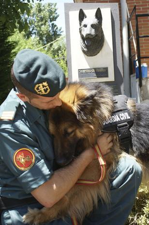 Condecoran a perro héroe por evitar un atentado