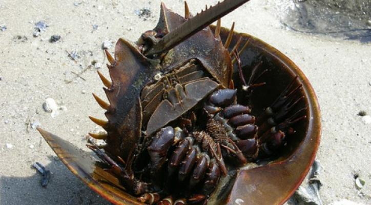 ¿La cacerola de mar podría frenar el VIH?