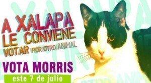 Insólito candidato a la alcaldía de Xalapa - Fotos y video