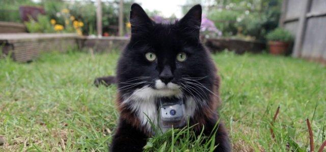 Insólito: Estrenan un 'Gran Hermano' de gatos