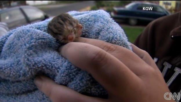 Fotos: Gatito nace con dos cabezas