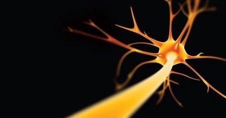 ¿Cuántas neuronas nacen por día?